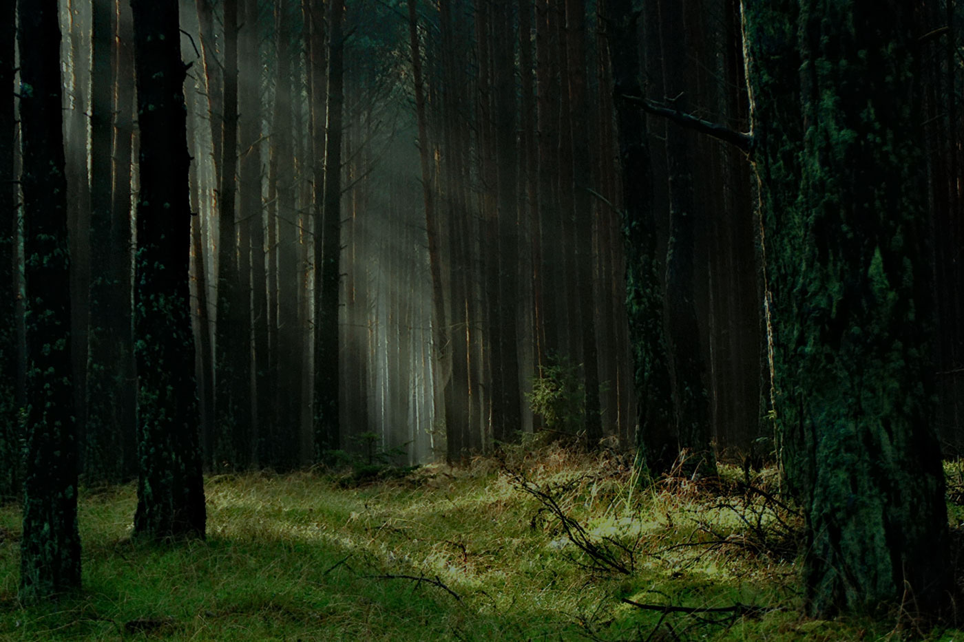 Thick forest broken with sunlight shining in the center